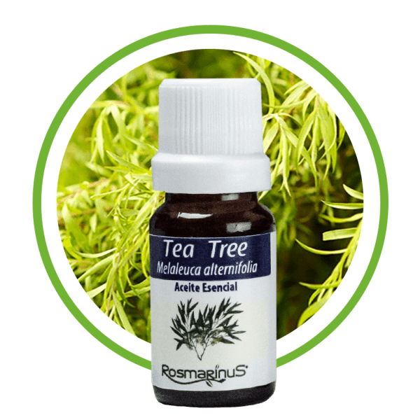 Arbol de te -Tea Tree